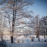 Frostfoto