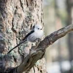 Isfoto och småfåglar