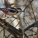 Fåglar – Råstasjön