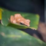 Besök i Zoobutiken zoobutiken uppsala herperschoise herpers djuraffär