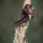 En dimmig morgon vid ödeladan spindel spider snigel snail quadratus mist hawk bug