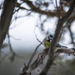 Småfåglar vid Dalkarlskärret tofsmes talgoxe svartmes småfåglar skjärtmes nötväcka kaveldun hackspett fågel blåmes