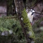 Småfåglar vid vindbrovägen småfåglar fåglar