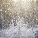 Ute i snön snöar snö skoter skogen