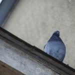 Fågeljakt  thebigyear2014 fasan fåglar