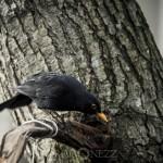 Äntligen en ekorre.. thebigyear2014 småfåglar råstasjön fysingen ekorre