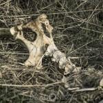 Inga problem med att få helgerna att gå vatten thebigyear2014 skelett skata sånglärka katt fors ben