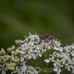 Macrofoto Morga hage spindel nyckelpiga macro insekter
