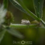 Macrofoto Fullerö nyckelpiga macro insekter fullerö