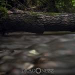 I djungeln vatten mjuktvatten långslutartid bäck