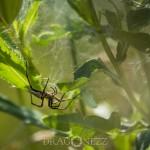 Ute i det gröna trollslända spindel skalbagge guldbagge