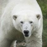 Orsa Björnpark   En speciell upplevelse orsagrönklitt orsabjörnpark orsa cyberphoto