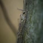 Macro i dimman tidig morgon snigel morga hage macro insekter ekar dimma