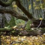 Höst vass vackra färger orange mossa löv kaveldun höst gult brygga