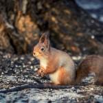 En tripp till Råstasjön squirrel solna råstasjön heron häger ekorre