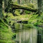 Vallmo Källa vatten vallmokälla urtidsdjur urskog stenar spegel skogen skog porträtt mossa bäck