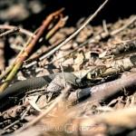 Vårvärme vitsippor viper vår toad spring snok snake padda orm groda frog