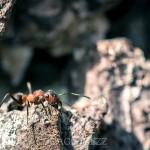 En tur till Fullerö viper spindel spider snake orm myra macrofoto macro huggorm fly fluga blåsippor ant