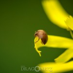Macro vid Morga hage tiny creatures small things macro insekter insects bugs