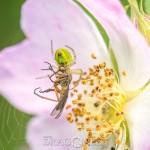 Macro vid Morga hage tiny creatures small things macro insekter insects bugs