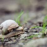 Sniglar tärna sniglar snigel snail slug ödla natur lizard fisk blomma
