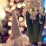 Jul i Sundsvall xmas x mas tomte sundsvall merry cristmas ljus julgran julfirande jul god jul fira jul christmas
