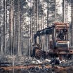 Skogsbranden i Västmanland   2 år senare västmanland skogsbrand skog ramnäs brand