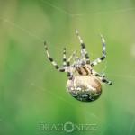 Sensommar macro web thread spindel spiderweb spider moth macro