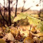 Höstfärger yellow orange höstfärger höst colour color brown autumn
