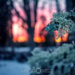 Vinterdag winter water vinter sunset soft magic lights ice colours colors cold