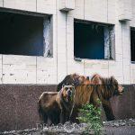 Kyiv   Tjernobyl   Prypyat tjornobyl tjernobyl strålning radiation prypyat prypjat pripyat övergivet kyiv kiev katatstrof exclution zone chornobyl abandoned