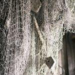 Macro vid kusten trollsländor snigel sländor nät macro kätting havet dragonfly bod