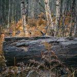 Skogspromenad träd svamp skogen promenad mossa löv höst färger