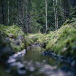 Skogspromenad vatten skogen mossa grenar färger