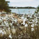 Gräsö summer sommar östersjön ocean nature natur hav gräsö