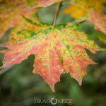 Höstdag leaf höst horse häst färger fall colors autumn